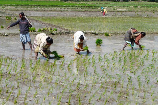 Welternährung: Ursachen für den Hunger in der Welt